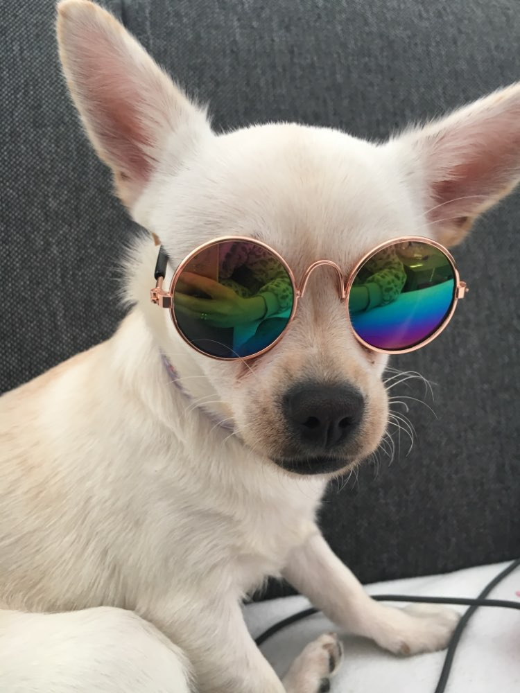 Sunnies for Small Dogs