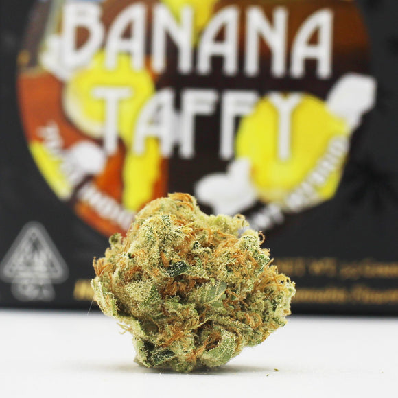 Banana Taffy (i/h) - Team Elite Genetics (29%)
