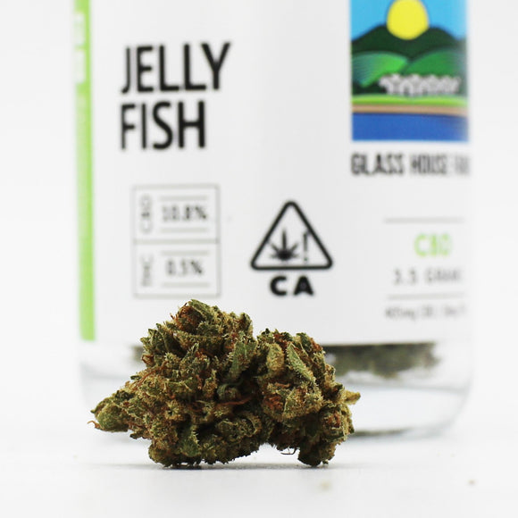 Jelly Fish (CBD) - Glass House Farms