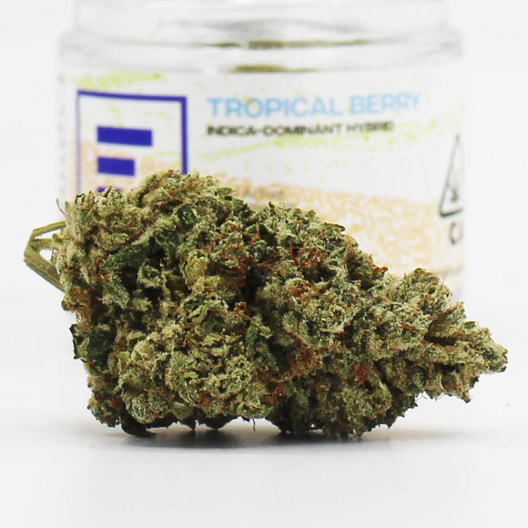 Tropical Berry (i)- Fade Co.