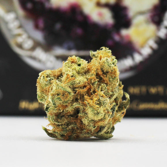 Vanilla Berry Pie (i) - Team Elite Genetics