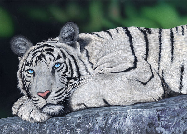 "White Tiger Painting Art - ""Baby Blues"" by Jason Fetko"