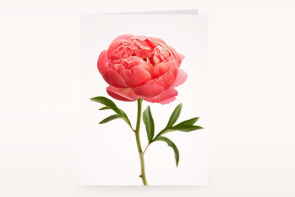 Waiheke Flower Company | New Zealand | Card
