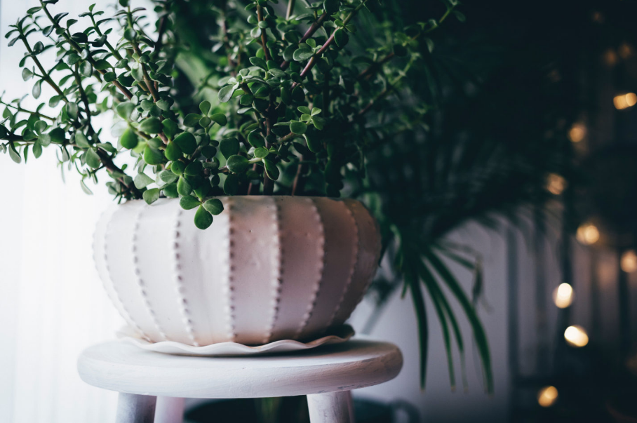 Statement Plants To Brighten Up Your Home
