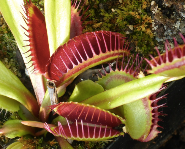 Freaky Flesh Eating Plants...a pick of our favourites!