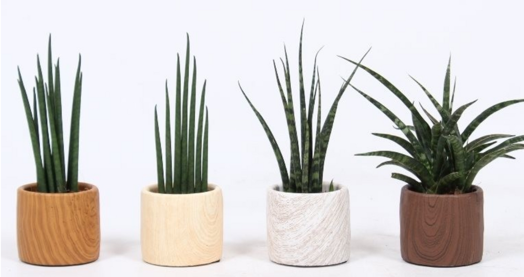 Win Three Designer Plant Pots