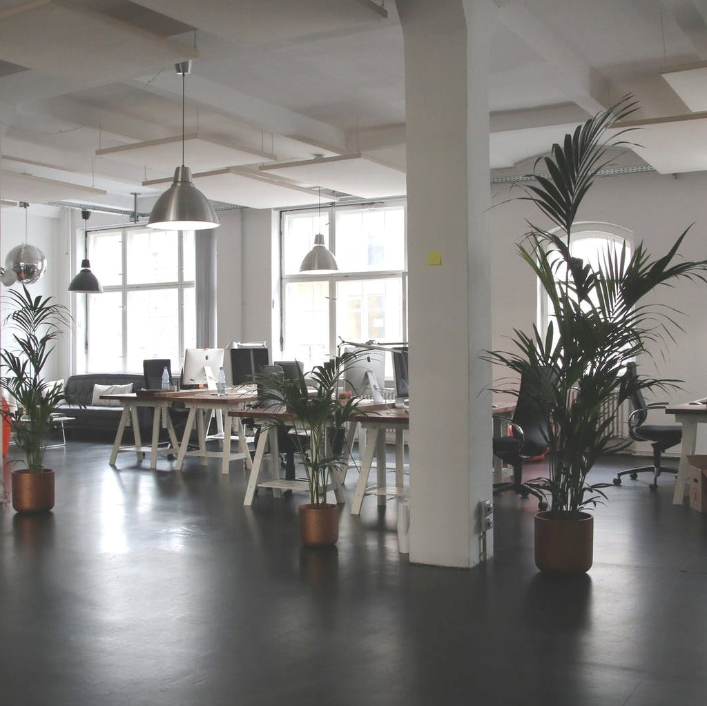 Research Says Green Offices are More Productive