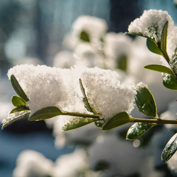 Caring for Indoor Plants When it's Snowing