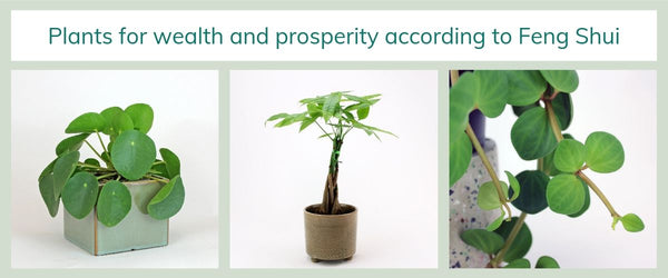 21st century Feng Shui and plants that bring you wealth