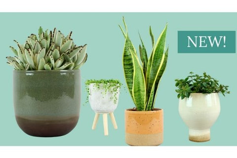 Easy Plant Care Collection