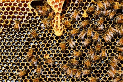 Let's Talk About Bees