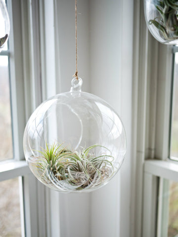 ideas to hang plants indoors