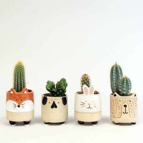 Prickly Pets