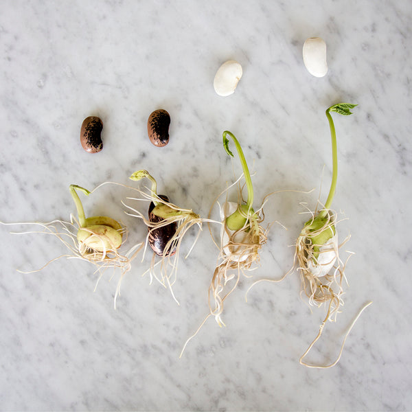 Seeds for Home Germination
