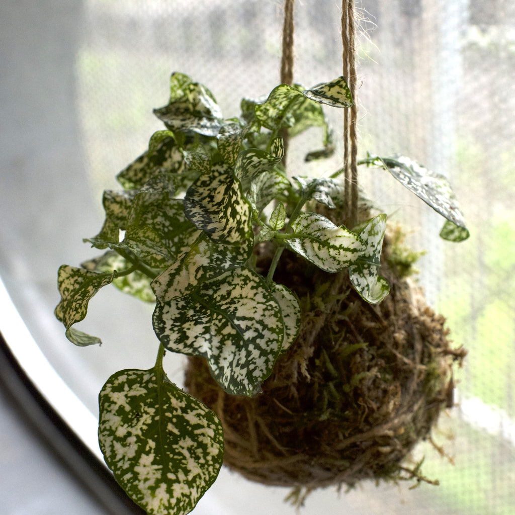 Kokedama Moss Ball Kit