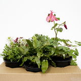Outdoor Plants Box - Annual/Gift