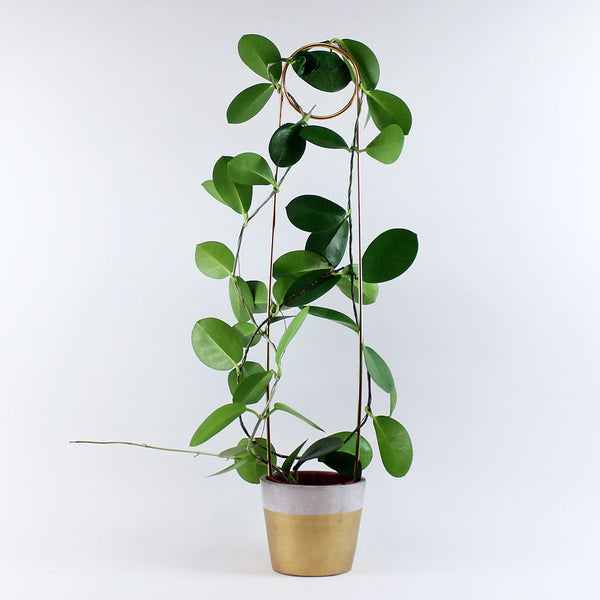 Safety Pin Plant Support