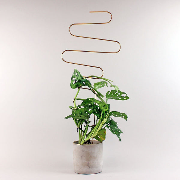 Squiggle Plant Support