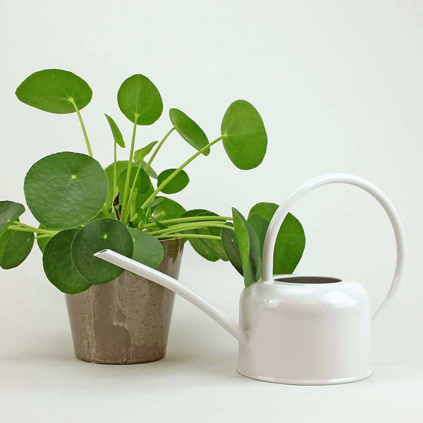 White Enamel Watering Can