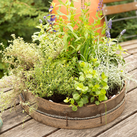 Inspiring Summer Herbs Collection