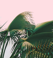 Canvas Palm Love