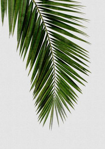 Canvas Palm Leaf I