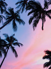 Canvas Sunset Palms
