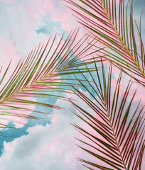 Canvas Palms + Sky