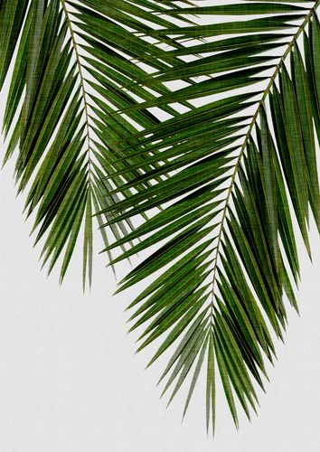 Canvas Palm Leaf II