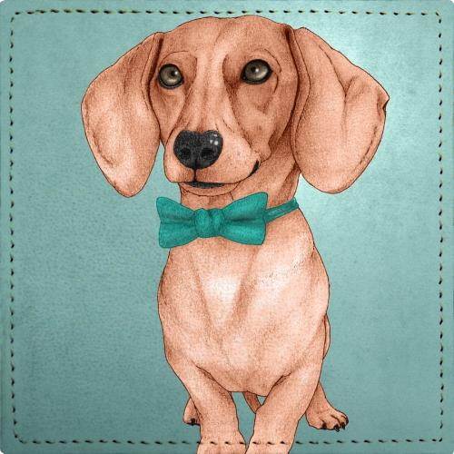 Posavasos Dachshund, The Wiener Dog.