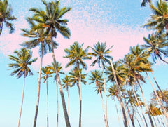 Canvas Coconut Palms