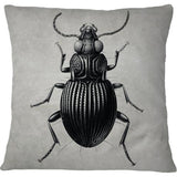 Cojin Antique Beetle Art Print