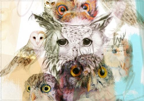 Individuales Family Owls