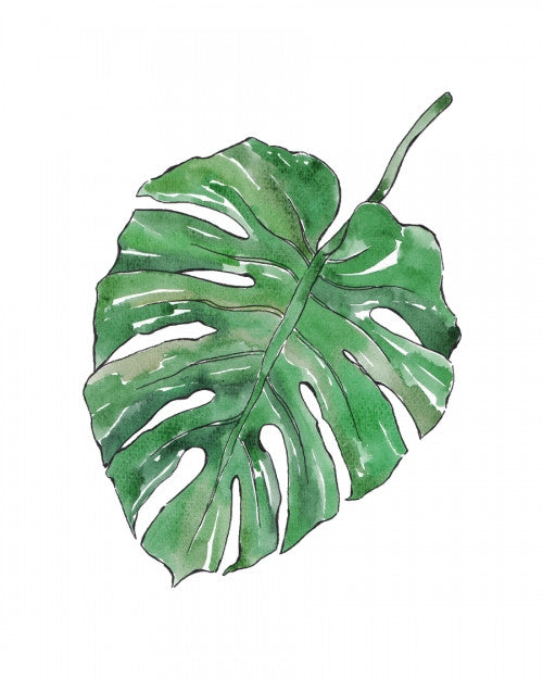 Canvas Monstera Deliciosa - Galeria Impresionarte