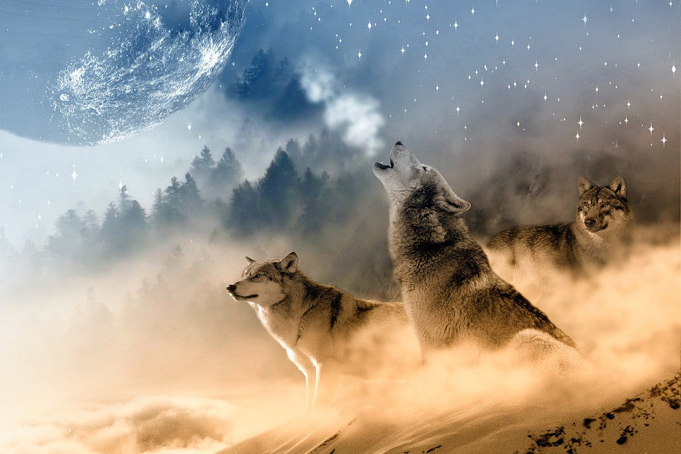 Lupus the name for wolves stand howling at the moon.