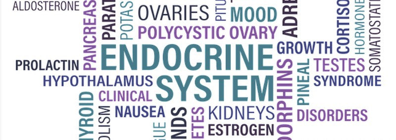 adrenal endocrine system pix up of words