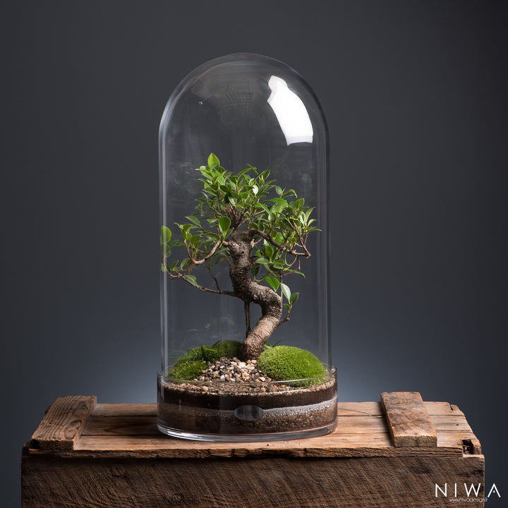Niwa Designs Terrarium - Curiosity (Small)