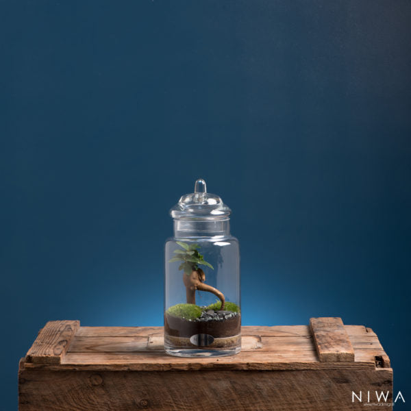 Niwa Designs Terrarium - Small World (1, Glass)