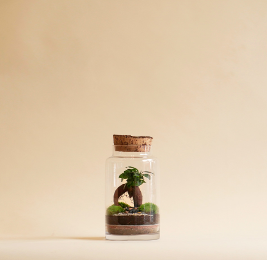 Niwa Designs Terrarium - Small World (1L, Cork)