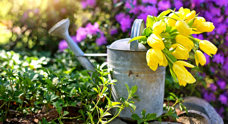 Top Gardening Tips For August