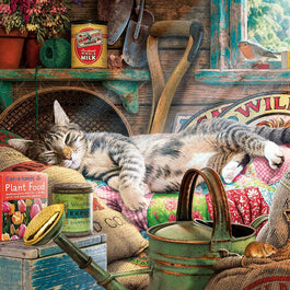 Snoozing in the Shed