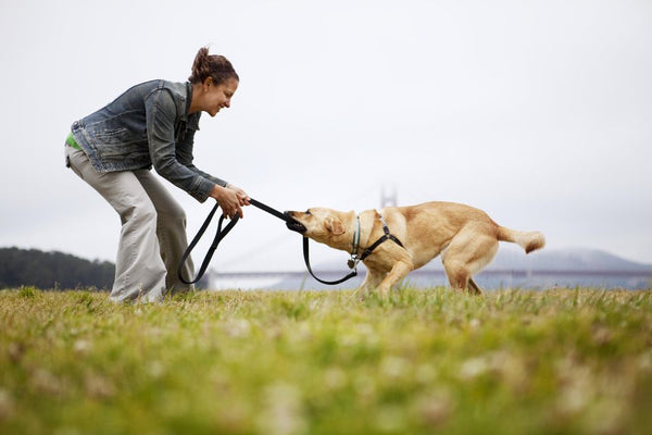 Woman playing tug of ware with dog