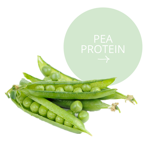 Realm All Natural Ingredients - Pea Protein
