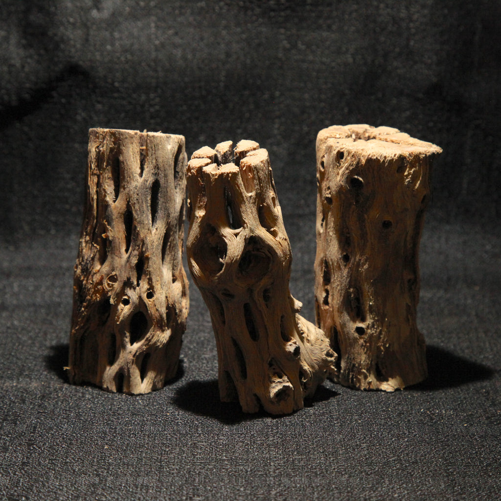 Cholla Wood Sm 3 Pack