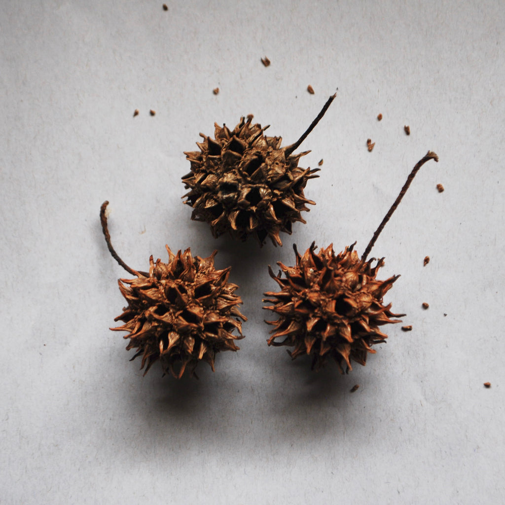Sweet Gum Pods (3-Pack)