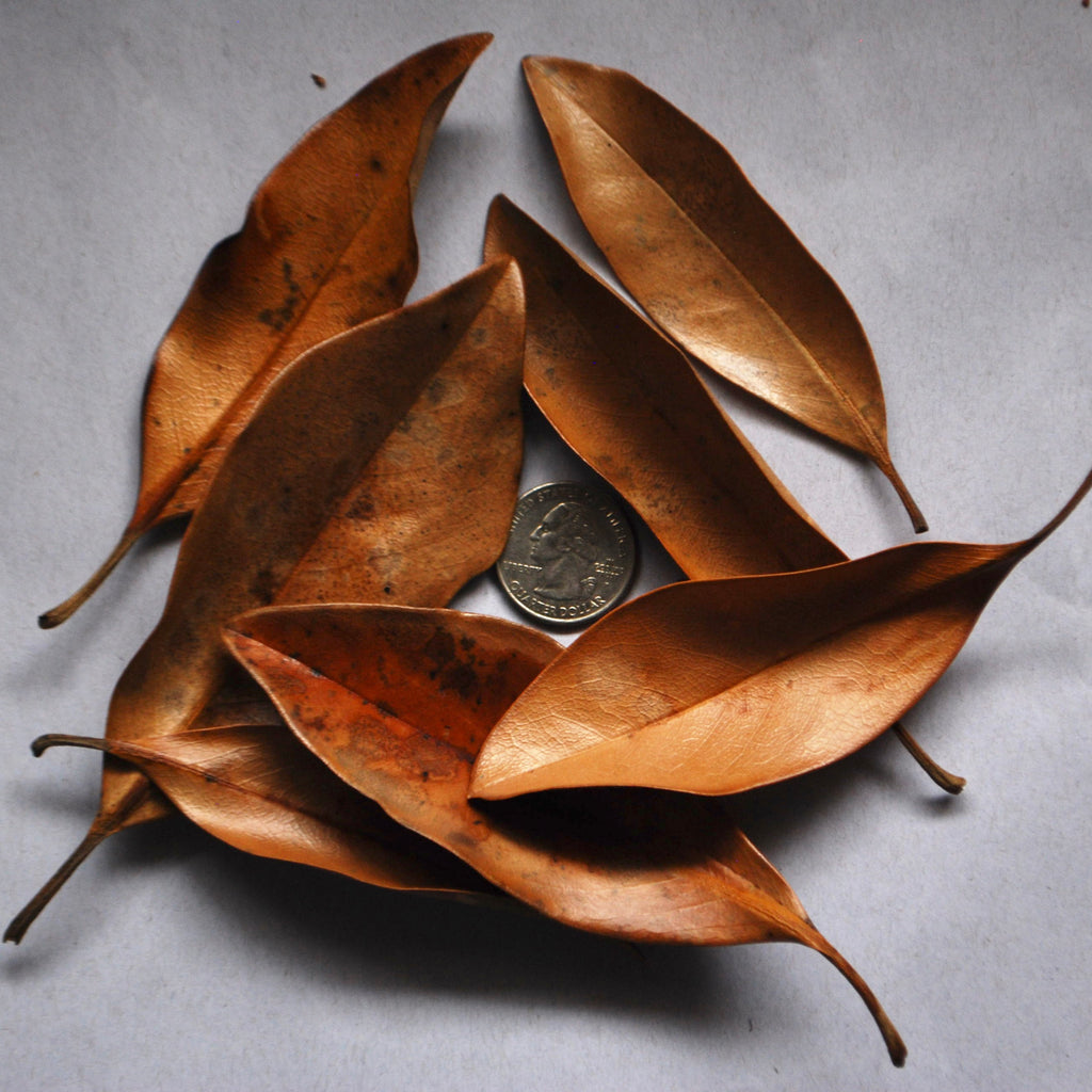Small Magnolia Leaves (5-Pack)