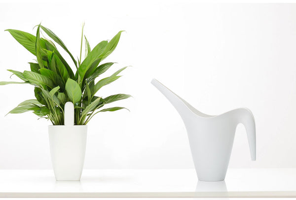 Xiaomi Mi Smart Plant & Flower Care Monitor (English Version)