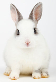 EPA Issues Draft Policy to Reduce Animal Testing for Skin Sensitization