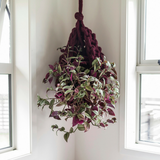 Chunky yarn hanging plant basket by Plump & Co