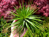 Air Plant Club Gift Subscription <br> (1, 3, and 6 Month Options) - Air Plant Hub